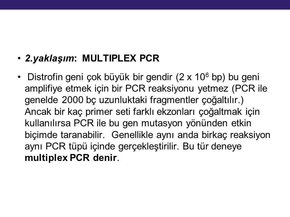 2.yaklaşım: MULTIPLEX PCR
