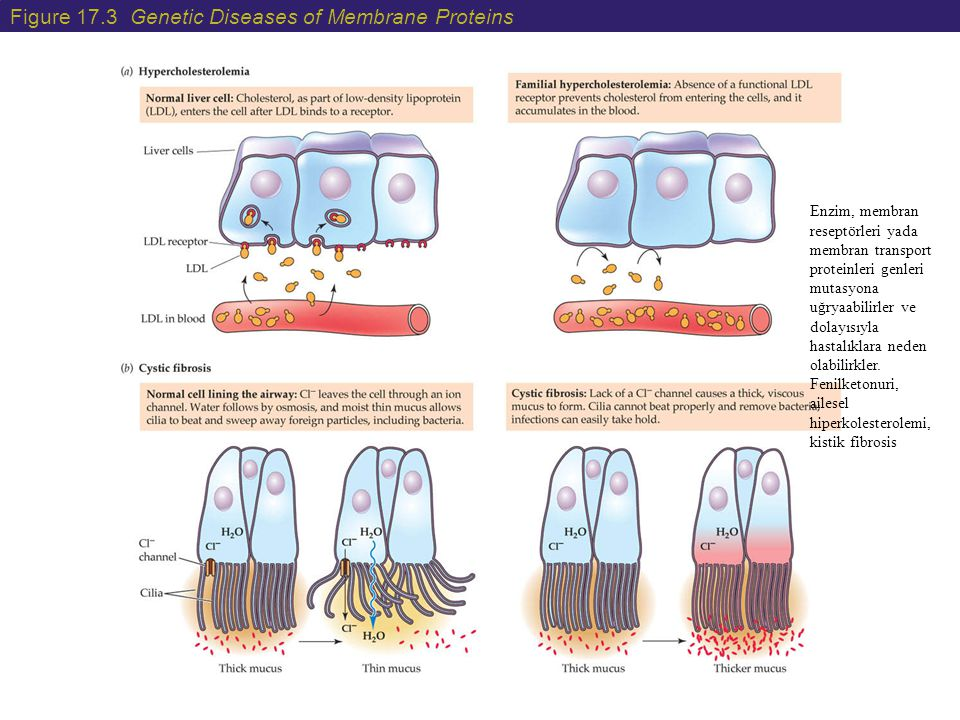 Figure 17.3 Genetic Diseases of Membrane Proteins