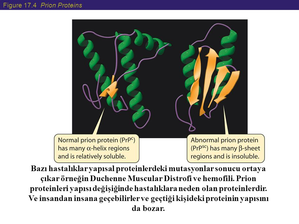Figure 17.4 Prion Proteins