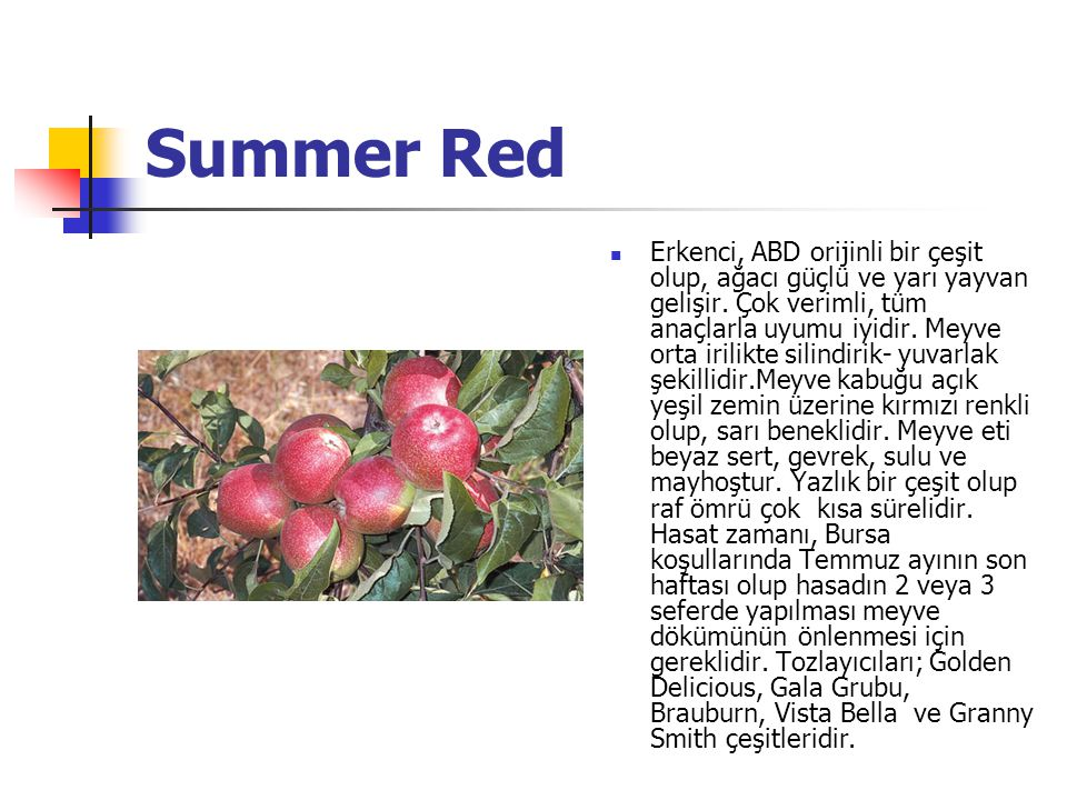 Summer Red