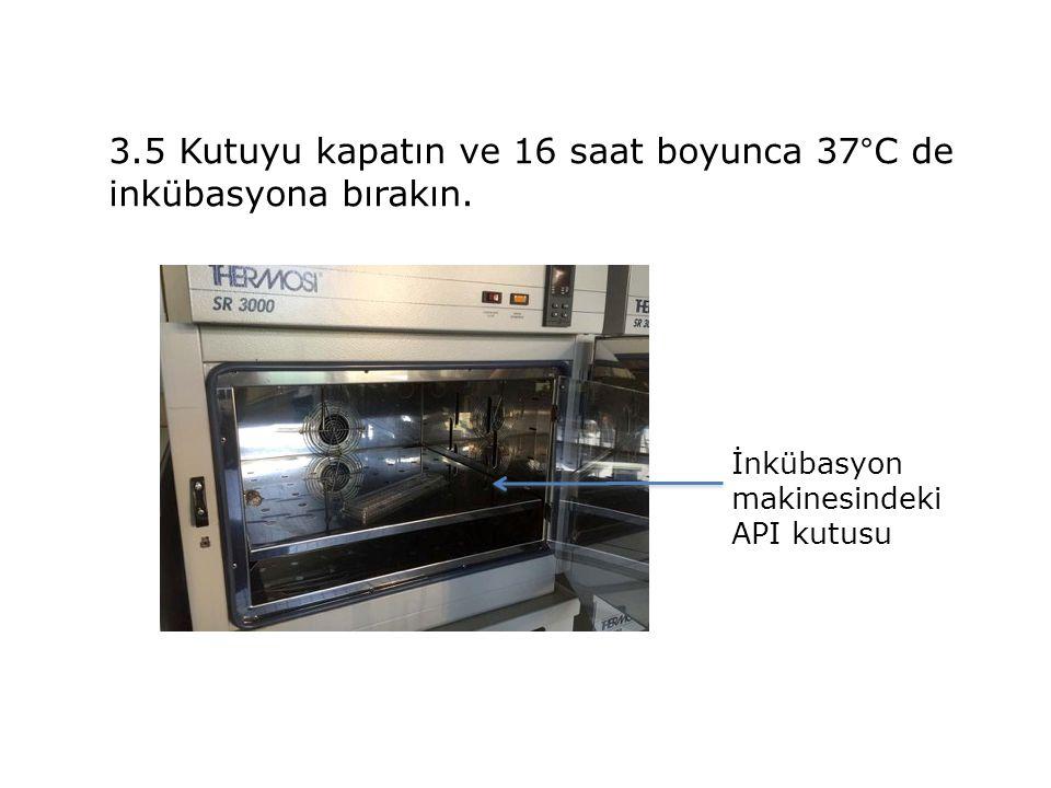 3.5 Kutuyu kapatın ve 16 saat boyunca 37°C de inkübasyona bırakın.