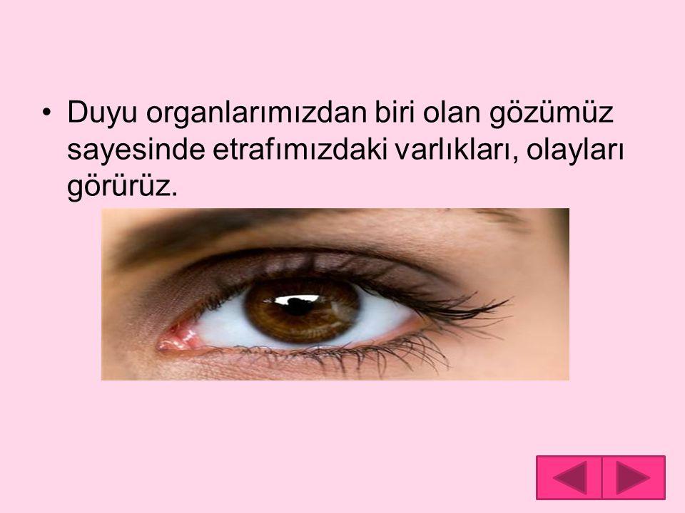 Duyu organlarımızdan biri olan gözümüz sayesinde etrafımızdaki varlıkları, olayları görürüz.