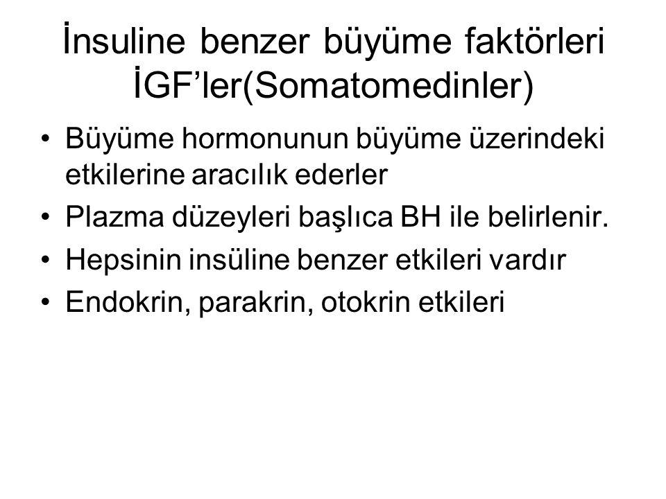 İnsuline benzer büyüme faktörleri İGF'ler(Somatomedinler)