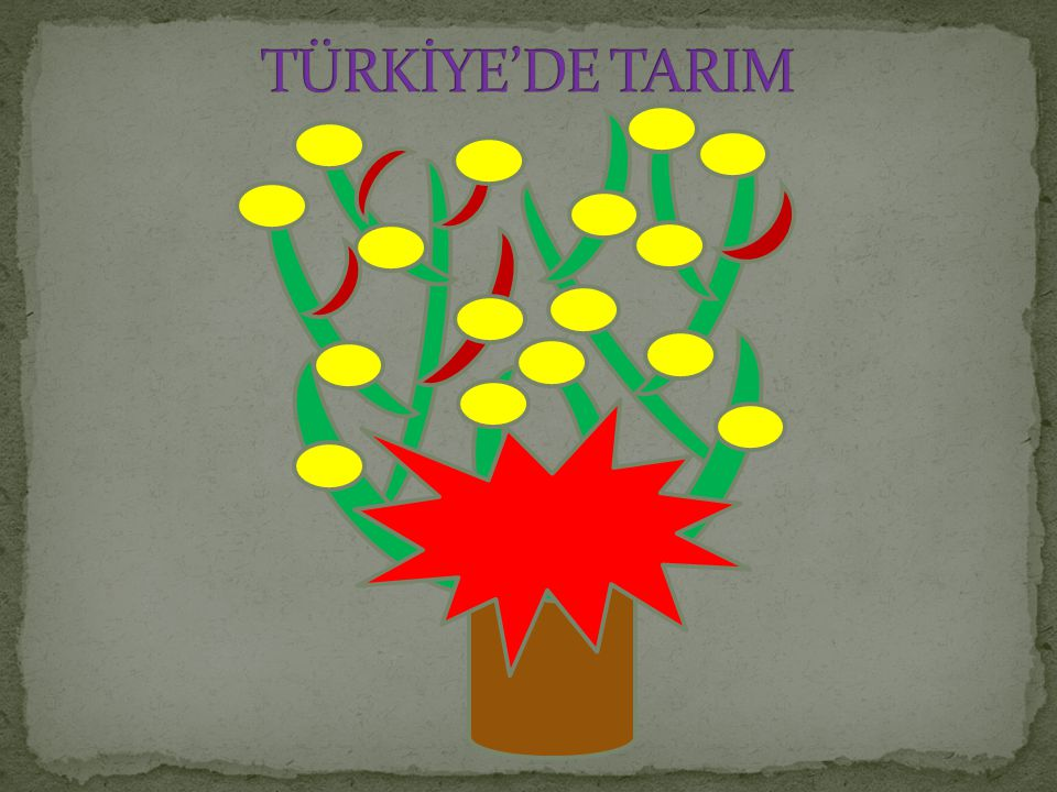 TÜRKİYE'DE TARIM