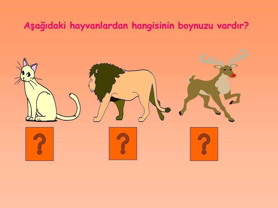 Aşağıdaki hayvanlardan hangisinin boynuzu vardır