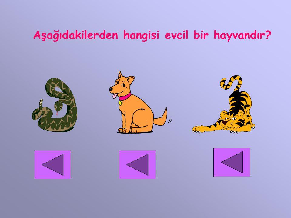 Aşağıdakilerden hangisi evcil bir hayvandır