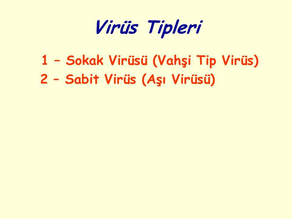 Virüs Tipleri 1 – Sokak Virüsü (Vahşi Tip Virüs)