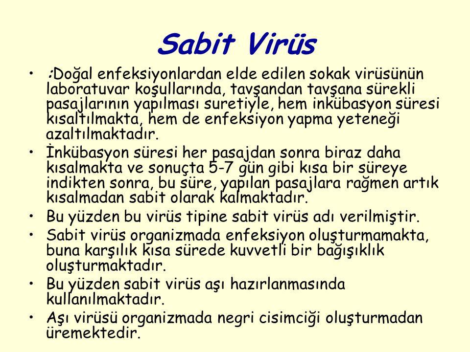 Sabit Virüs