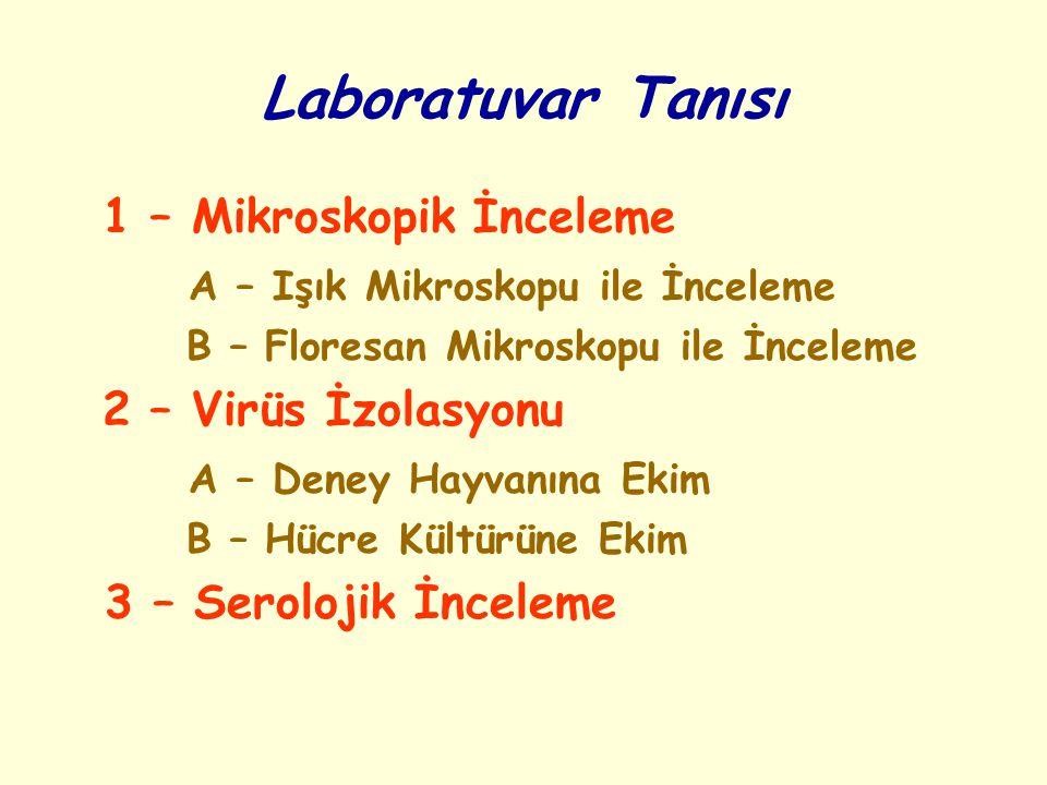 Laboratuvar Tanısı 1 – Mikroskopik İnceleme