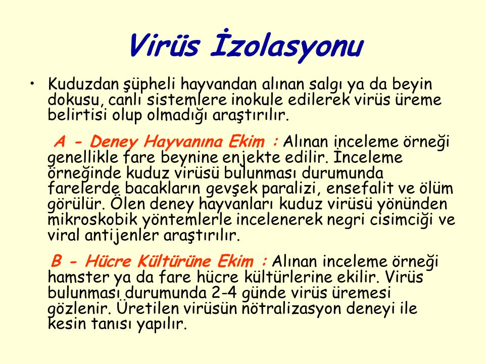 Virüs İzolasyonu
