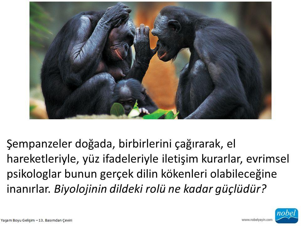 Şempanzeler doğada, birbirlerini çağırarak, el hareketleriyle, yüz ifadeleriyle iletişim kurarlar, evrimsel psikologlar bunun gerçek dilin kökenleri olabileceğine inanırlar.
