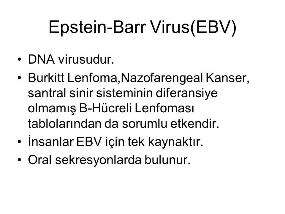 Epstein-Barr Virus(EBV)