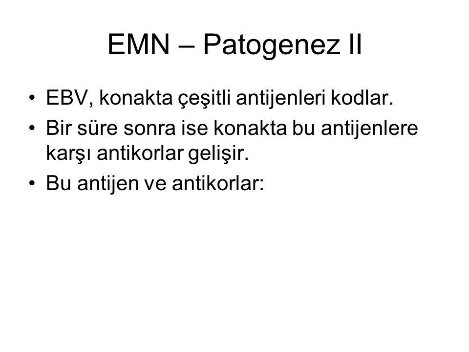EMN – Patogenez II EBV, konakta çeşitli antijenleri kodlar.