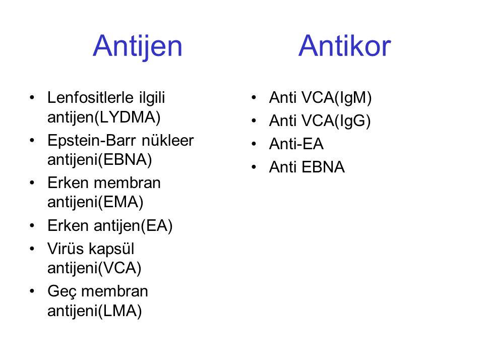 Antijen Antikor Lenfositlerle ilgili antijen(LYDMA)