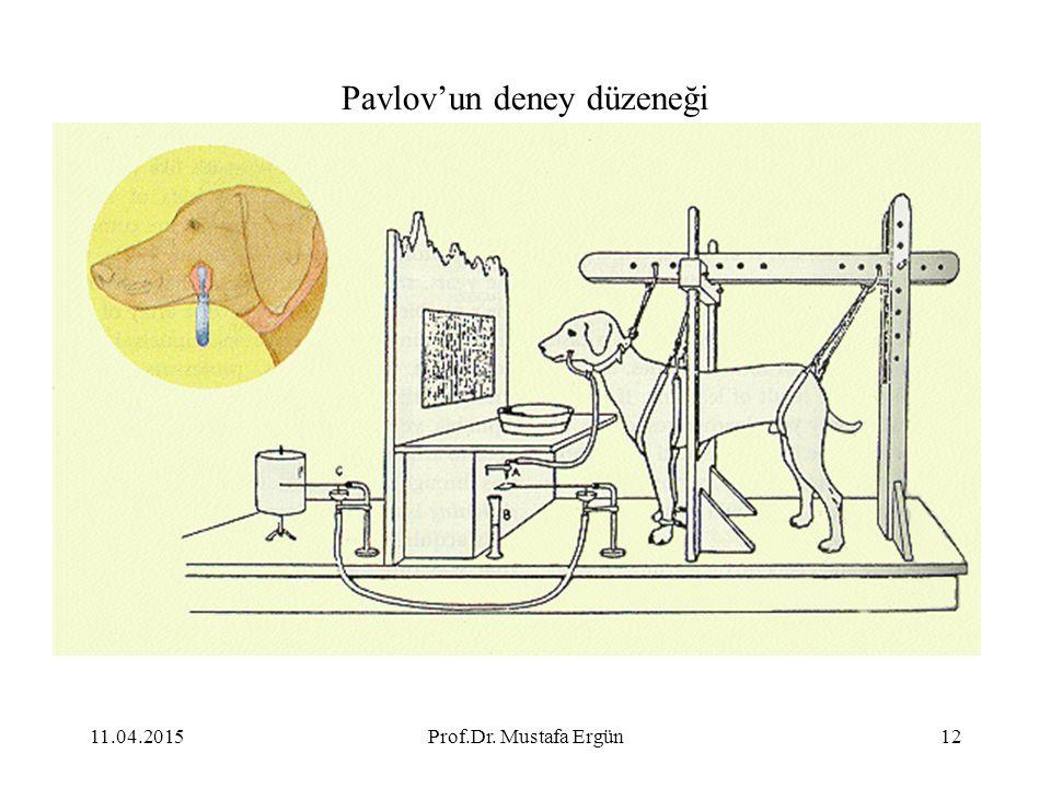 Pavlov'un deney düzeneği