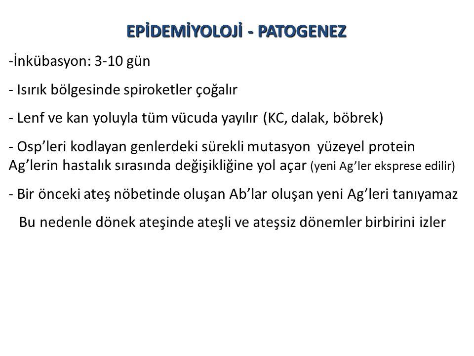 EPİDEMİYOLOJİ - PATOGENEZ
