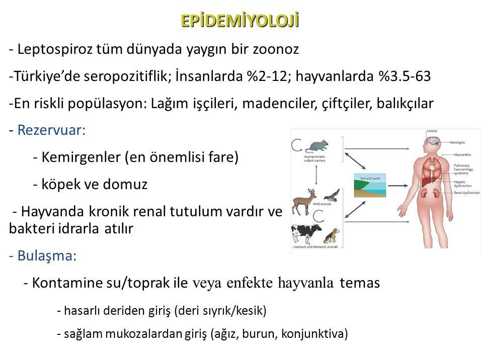 EPİDEMİYOLOJİ Leptospiroz tüm dünyada yaygın bir zoonoz
