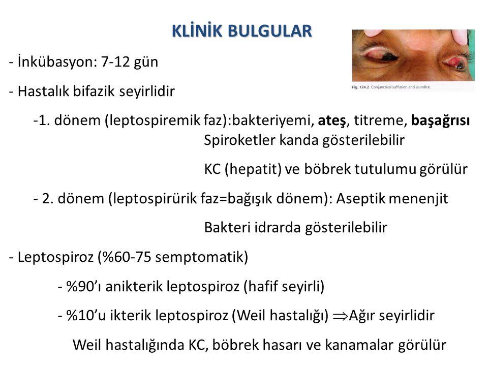 KLİNİK BULGULAR - İnkübasyon: 7-12 gün - Hastalık bifazik seyirlidir
