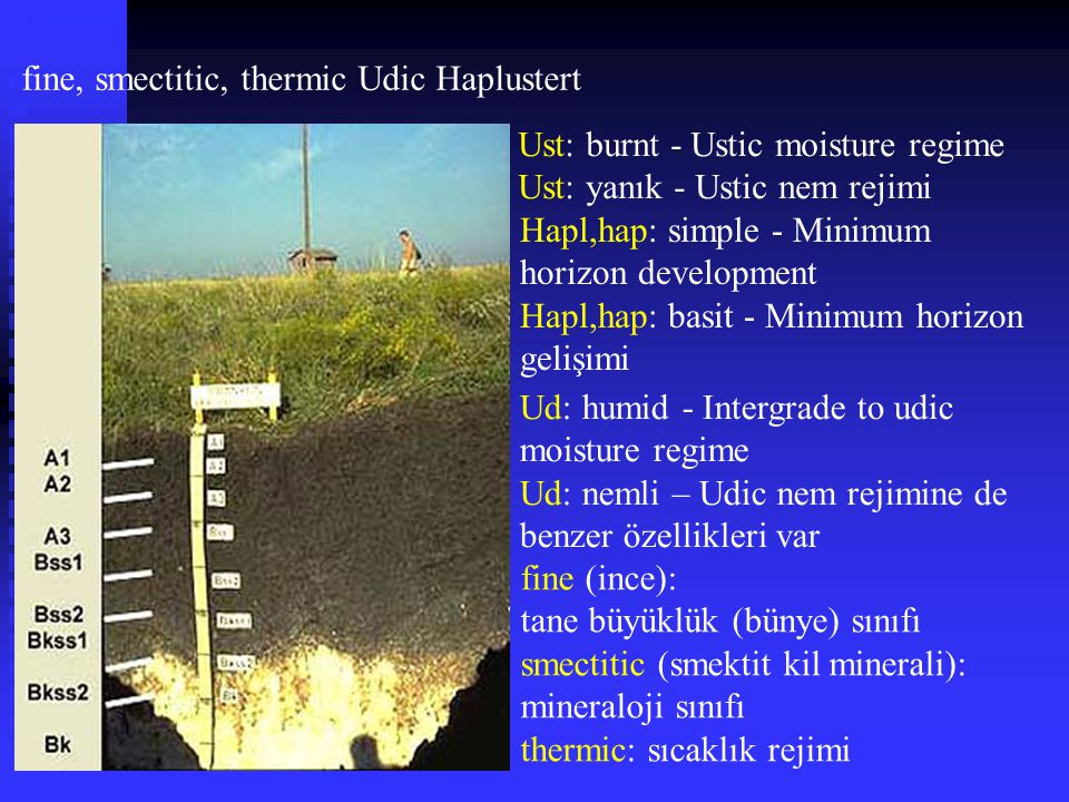 fine, smectitic, thermic Udic Haplustert