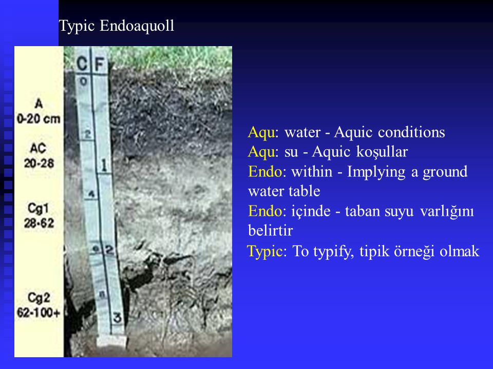 Typic Endoaquoll Aqu: water - Aquic conditions. Aqu: su - Aquic koşullar. Endo: within - Implying a ground water table.