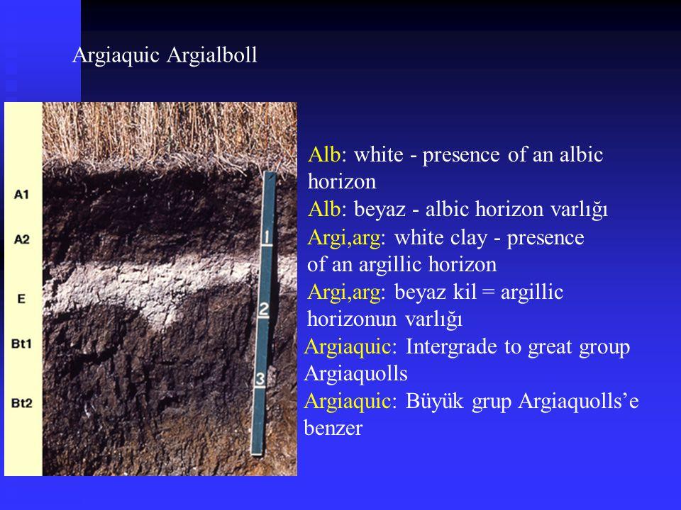 Argiaquic Argialboll Alb: white - presence of an albic horizon. Alb: beyaz - albic horizon varlığı.