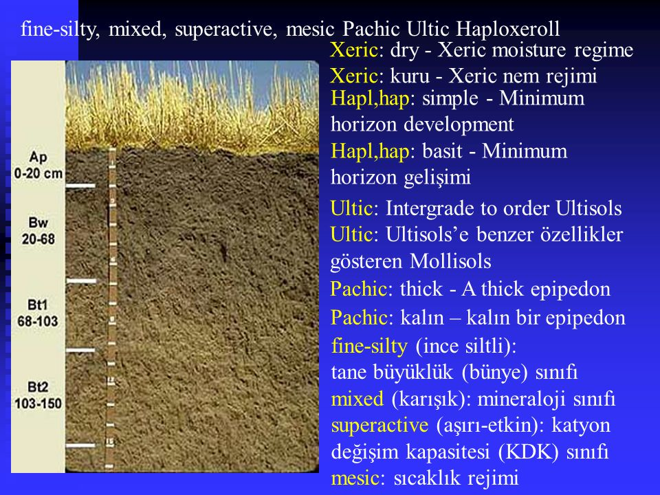 fine-silty, mixed, superactive, mesic Pachic Ultic Haploxeroll