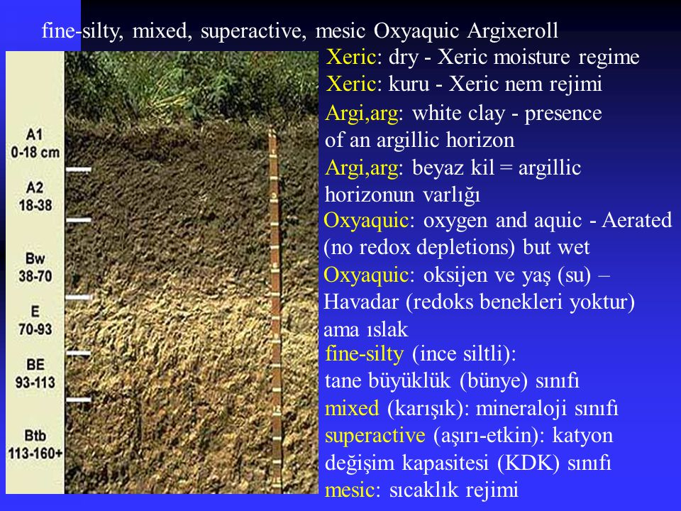 fine-silty, mixed, superactive, mesic Oxyaquic Argixeroll