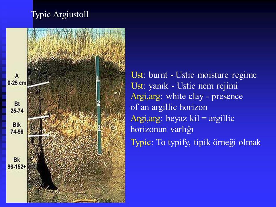 Typic Argiustoll Ust: burnt - Ustic moisture regime. Ust: yanık - Ustic nem rejimi. Argi,arg: white clay - presence of an argillic horizon.