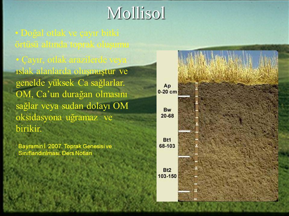 Mollisol Doğal otlak ve çayır bitki örtüsü altında toprak oluşumu