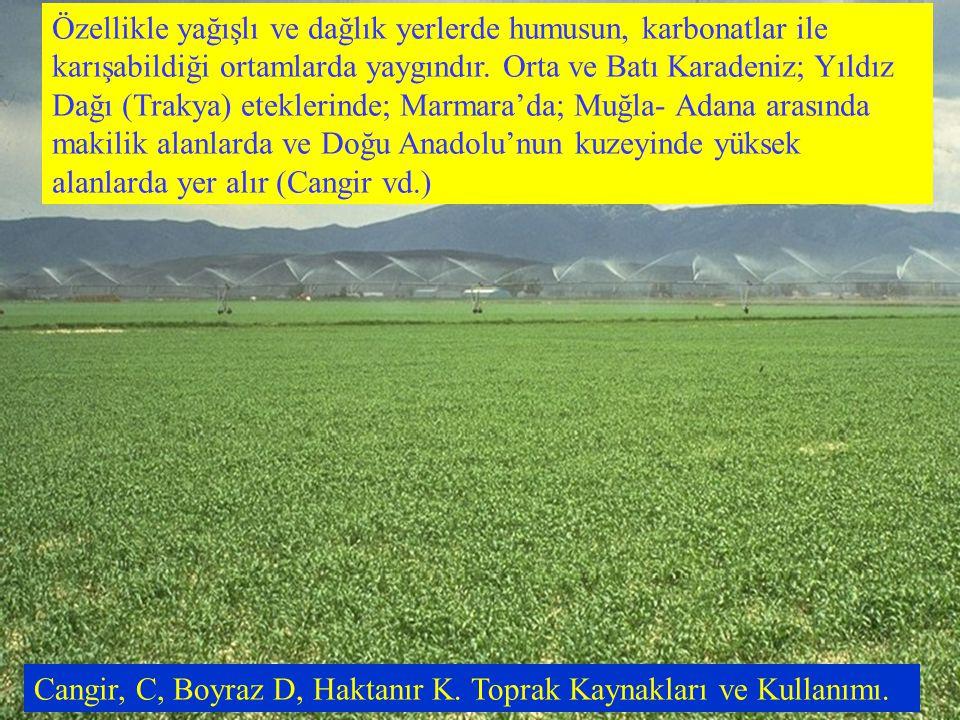 Özellikle yağışlı ve dağlık yerlerde humusun, karbonatlar ile karışabildiği ortamlarda yaygındır. Orta ve Batı Karadeniz; Yıldız Dağı (Trakya) eteklerinde; Marmara'da; Muğla- Adana arasında makilik alanlarda ve Doğu Anadolu'nun kuzeyinde yüksek alanlarda yer alır (Cangir vd.)