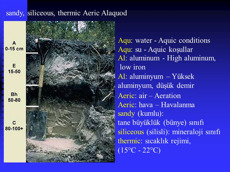 sandy, siliceous, thermic Aeric Alaquod