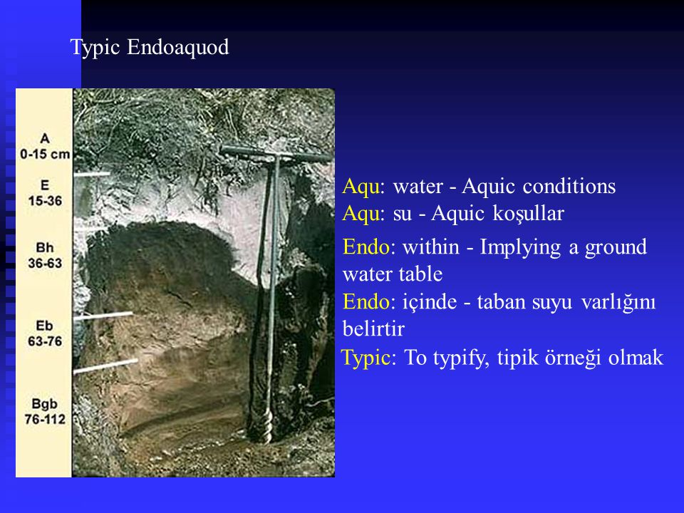 Typic Endoaquod Aqu: water - Aquic conditions. Aqu: su - Aquic koşullar. Endo: within - Implying a ground water table.