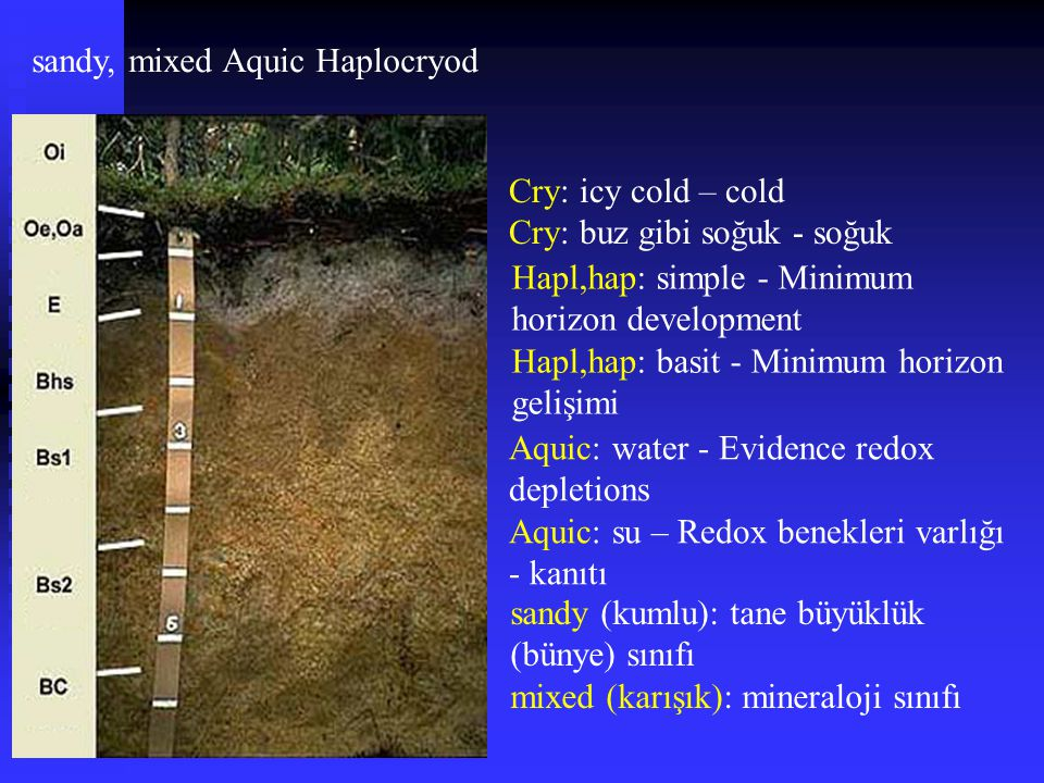 sandy, mixed Aquic Haplocryod