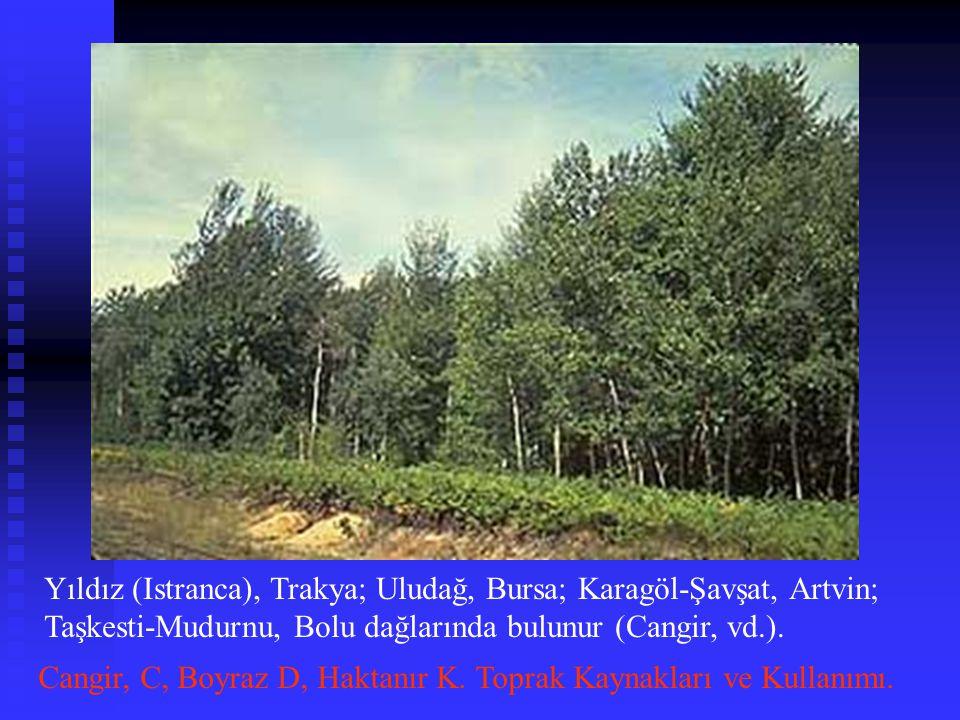 Yıldız (Istranca), Trakya; Uludağ, Bursa; Karagöl-Şavşat, Artvin; Taşkesti-Mudurnu, Bolu dağlarında bulunur (Cangir, vd.).