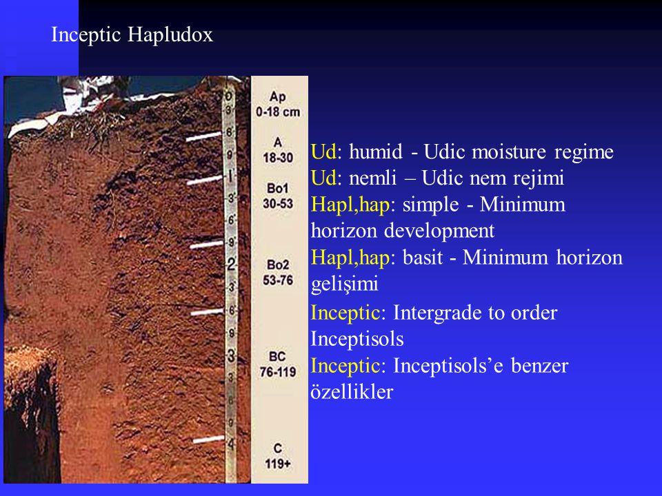 Inceptic Hapludox Ud: humid - Udic moisture regime. Ud: nemli – Udic nem rejimi. Hapl,hap: simple - Minimum horizon development.