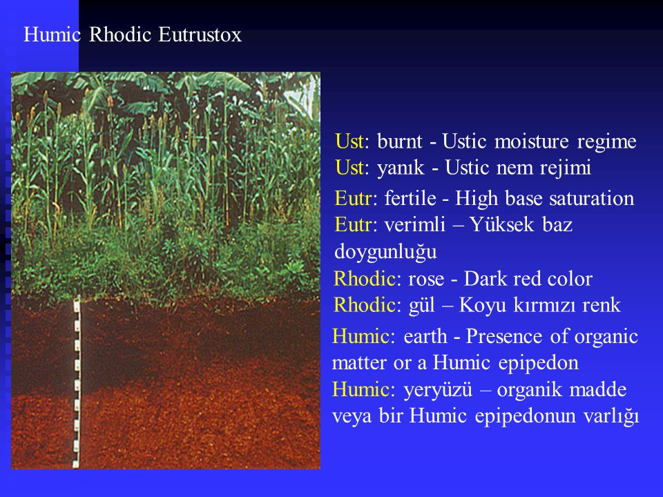 Humic Rhodic Eutrustox