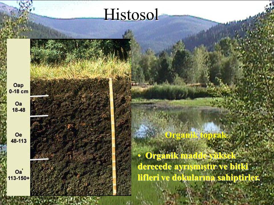 Histosol Organik toprak
