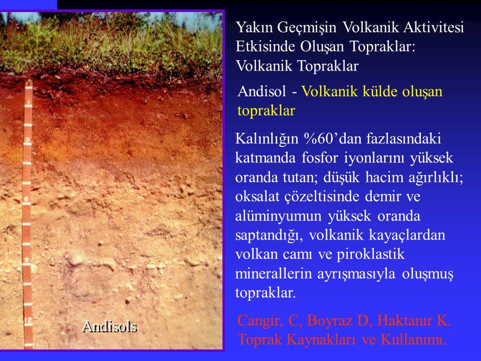Yakın Geçmişin Volkanik Aktivitesi Etkisinde Oluşan Topraklar: Volkanik Topraklar