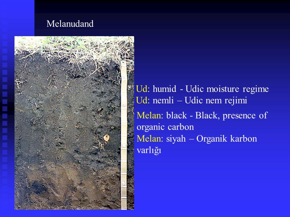Melanudand Ud: humid - Udic moisture regime. Ud: nemli – Udic nem rejimi. Melan: black - Black, presence of organic carbon.