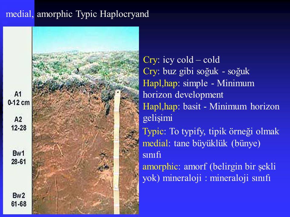 medial, amorphic Typic Haplocryand