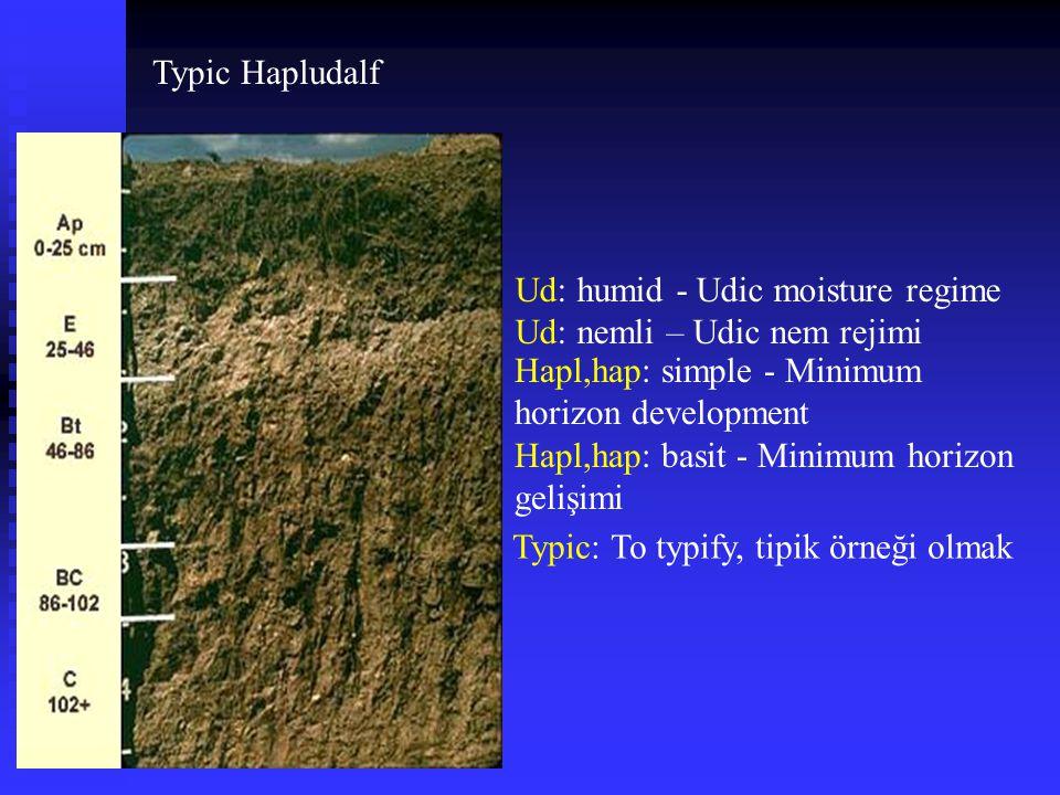 Typic Hapludalf Ud: humid - Udic moisture regime. Ud: nemli – Udic nem rejimi. Hapl,hap: simple - Minimum horizon development.