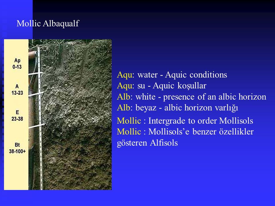 Mollic Albaqualf Aqu: water - Aquic conditions. Aqu: su - Aquic koşullar. Alb: white - presence of an albic horizon.