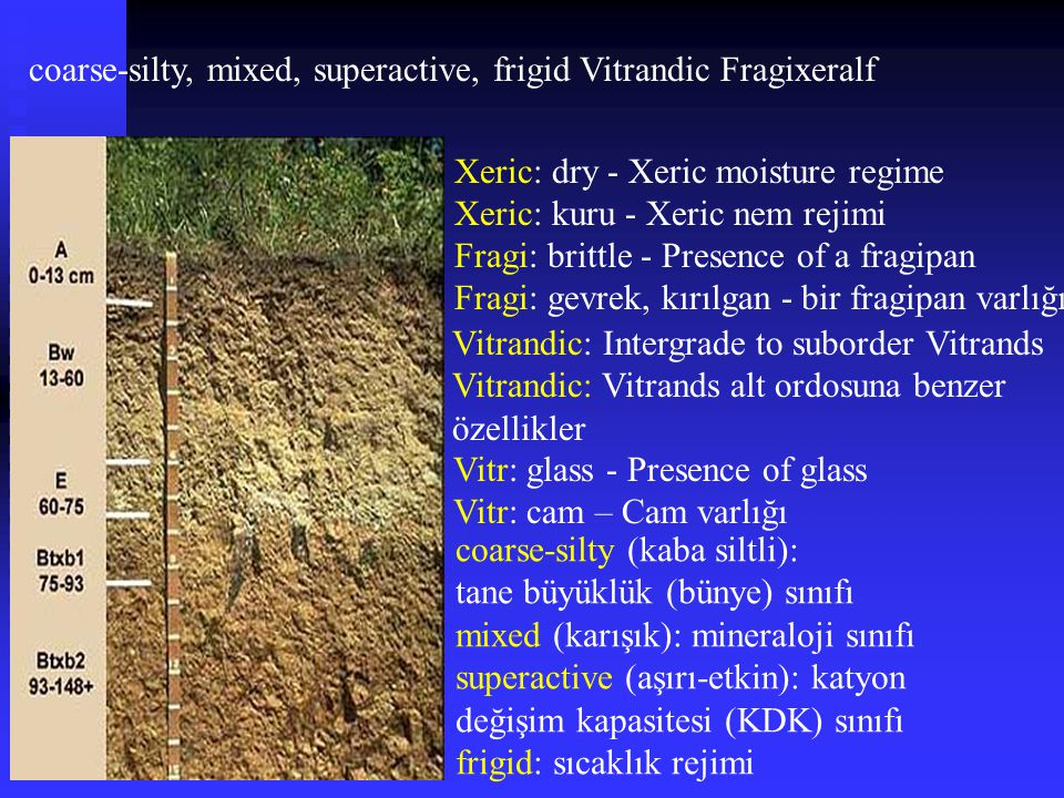coarse-silty, mixed, superactive, frigid Vitrandic Fragixeralf