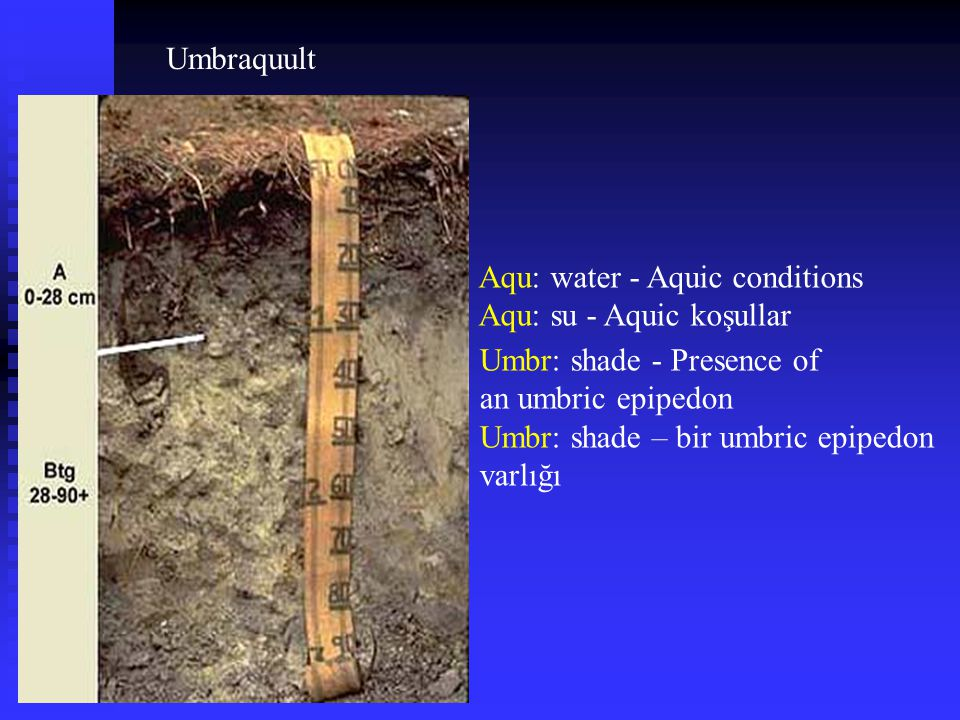 Umbraquult Aqu: water - Aquic conditions. Aqu: su - Aquic koşullar. Umbr: shade - Presence of. an umbric epipedon.