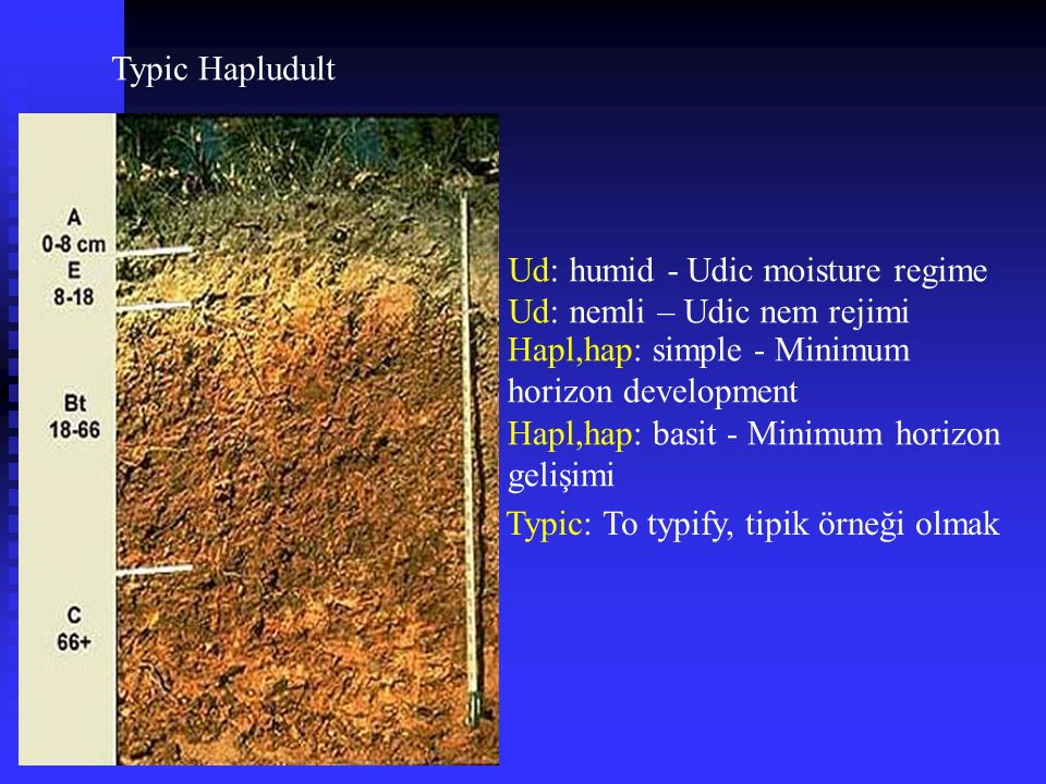 Typic Hapludult Ud: humid - Udic moisture regime. Ud: nemli – Udic nem rejimi. Hapl,hap: simple - Minimum horizon development.