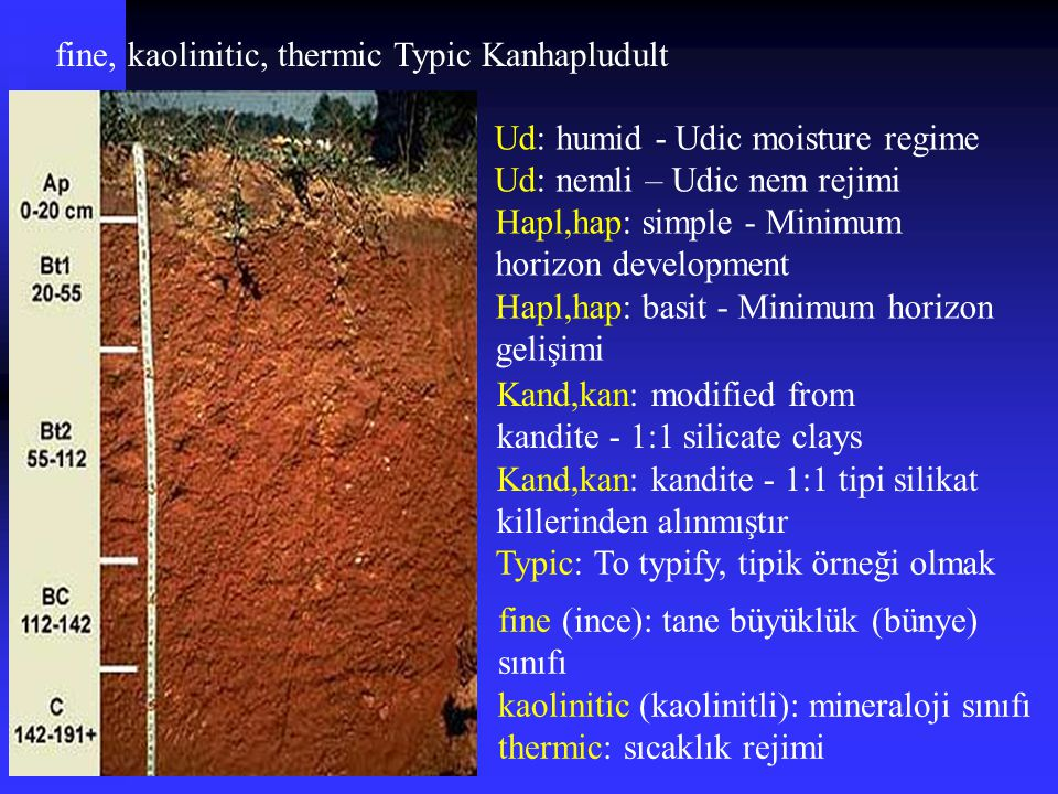 fine, kaolinitic, thermic Typic Kanhapludult