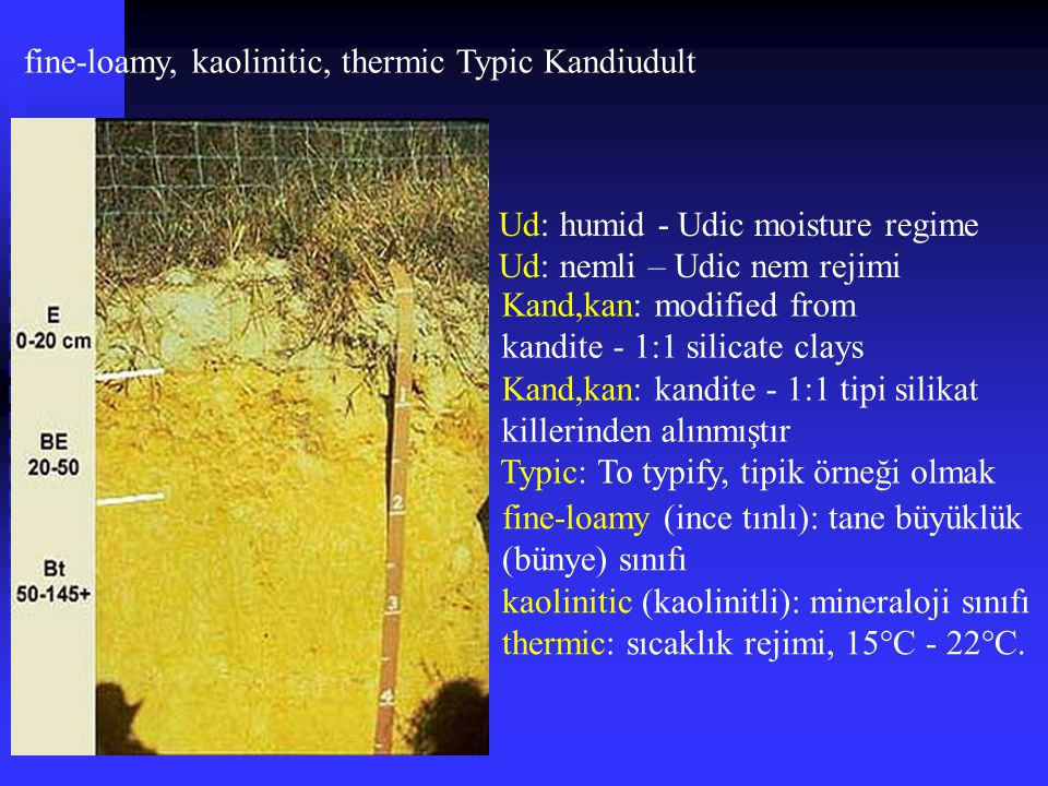 fine-loamy, kaolinitic, thermic Typic Kandiudult