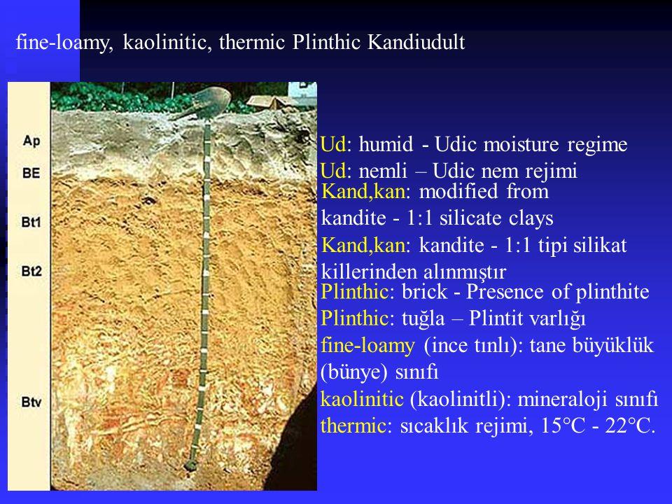 fine-loamy, kaolinitic, thermic Plinthic Kandiudult
