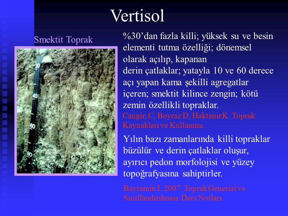 Vertisol %30'dan fazla killi; yüksek su ve besin elementi tutma özelliği; dönemsel olarak açılıp, kapanan.