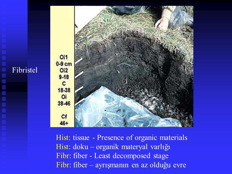 Fibristel Hist: tissue - Presence of organic materials. Hist: doku – organik materyal varlığı. Fibr: fiber - Least decomposed stage.